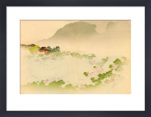 Lotus or Nelumbum speciosum by L. Boehmer & Co