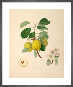 The Wax Apple by William Hooker