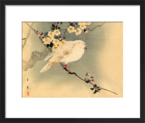 Dove with Blossom by Anonymous