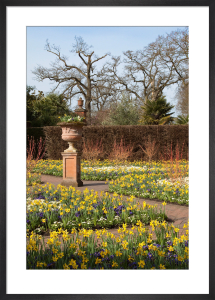 The Walled Garden Wisley in Spring by Carol Sheppard