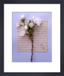 Apple Blossom by Deborah Schenck