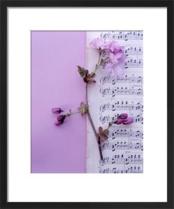 Crabapple Blossom by Deborah Schenck