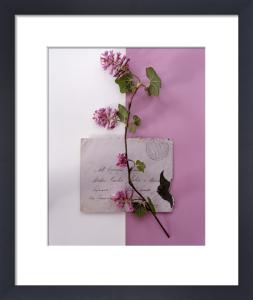 Flowering Currant by Deborah Schenck