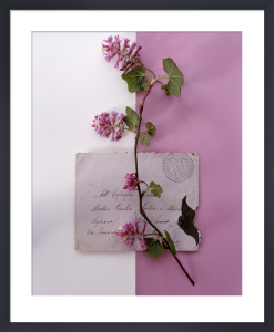 Flowering Currant by Deborah Schenck