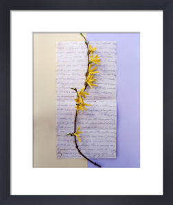 Forsythia by Deborah Schenck