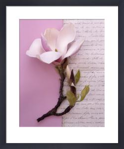 Magnolia by Deborah Schenck