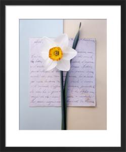Narcissus by Deborah Schenck