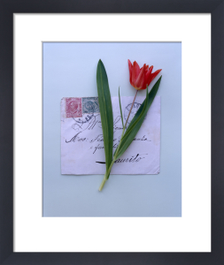 Red Tulip by Deborah Schenck