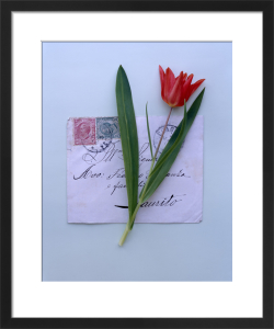 Red Tulip by Deborah Schenck