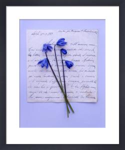 Scillia by Deborah Schenck