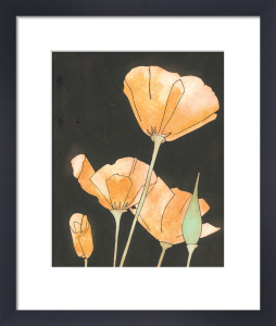 Californian Poppies by Rosie Scott