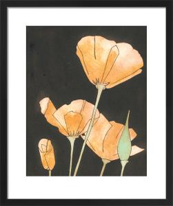 Californian Poppies by Rosie Scott
