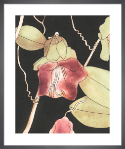 Cobaea scandens by Rosie Scott