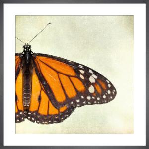 Monarch by Robert Cadloff