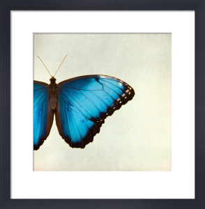 Morpho by Robert Cadloff