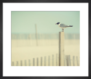 By the Sea by Robert Cadloff