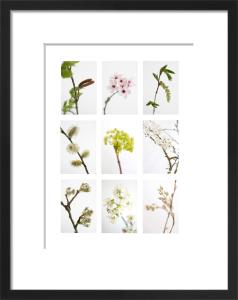 9 Flowering Trees by Deborah Schenck