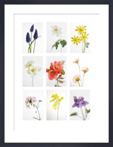 Champs des Fleurs Sauvages by Deborah Schenck
