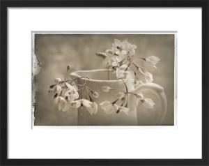 Cruche et Fleur de Printemps 2 by Deborah Schenck