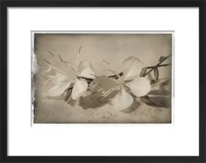 Dormir Fleurs by Deborah Schenck