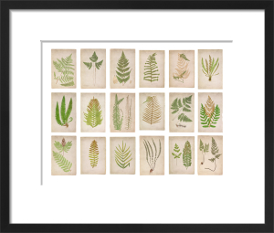 Fern Panel 1 by Deborah Schenck