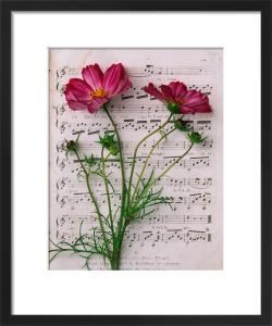 Music and Cosmos by Deborah Schenck