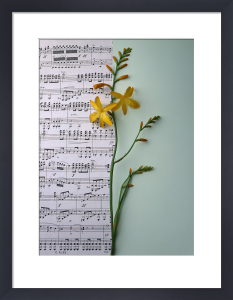 Music and Montbretia by Deborah Schenck