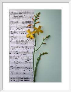 Music and Montbretia by Deborah Schenck
