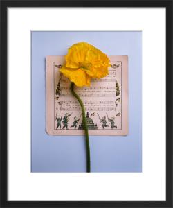 Music and Yellow Poppy by Deborah Schenck