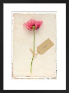 Poppy by Deborah Schenck