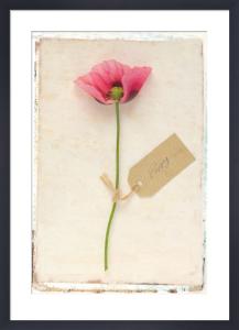 Poppy by Deborah Schenck