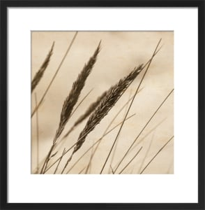Rushes 2 by Deborah Schenck