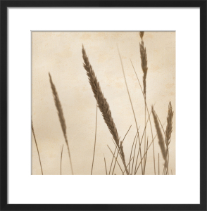 Rushes 3 by Deborah Schenck