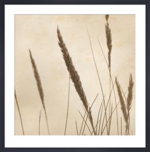 Rushes 3 by Deborah Schenck