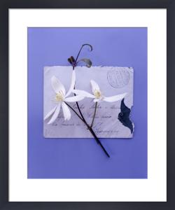 White Clematis by Deborah Schenck