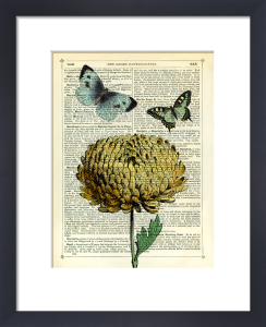 Flower and Butterflies by Marion McConaghie