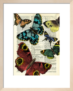 Selection of Butterflies by Marion McConaghie
