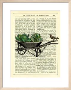 Wheelbarrow Lettuce and Bird by Marion McConaghie