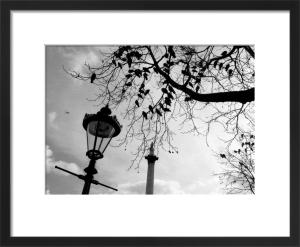 Birds waiting, Trafalgar Square by Niki Gorick