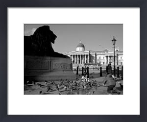 Brooding lion, Trafalgar Square by Niki Gorick