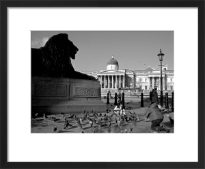 Brooding lion, Trafalgar Square by Niki Gorick