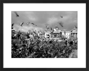 Pigeon walker, Trafalgar Square by Niki Gorick