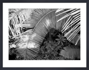 Palm fronds, Kew Gardens by Niki Gorick