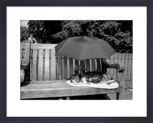 Dog nap, St. James' Park by Niki Gorick