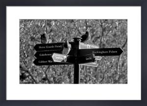 Pigeon post, St. James' Park by Niki Gorick