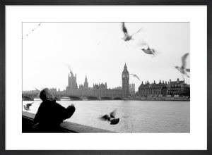 The gull feeder, River Thames by Niki Gorick
