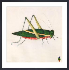Grasshopper by Deborah Schenck