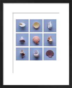 Hope Shells by Deborah Schenck
