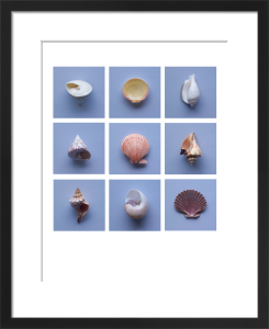 Hope Shells by Deborah Schenck