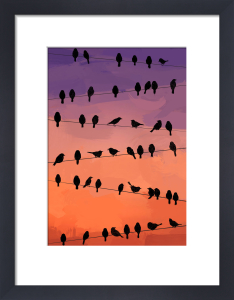 Flock by Jeremy Harnell